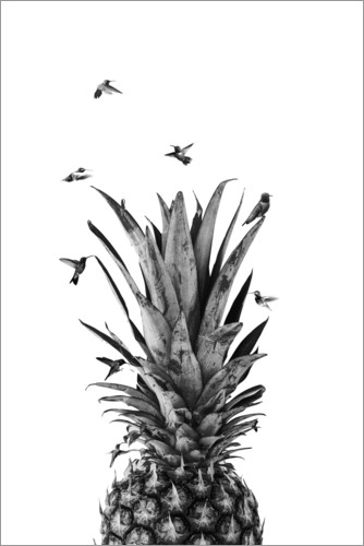 Plakat Pineapple birds