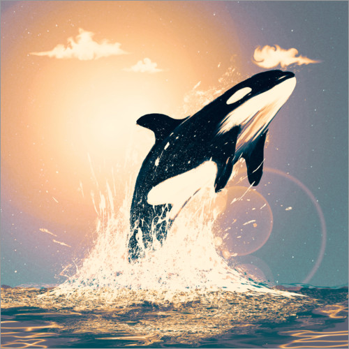 Plakat Orcas can fly