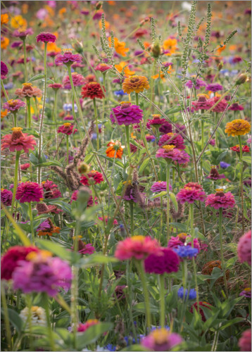 Plakat The colorful wild flowers of France