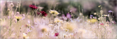 Plakat Panorama of a wildflower meadow