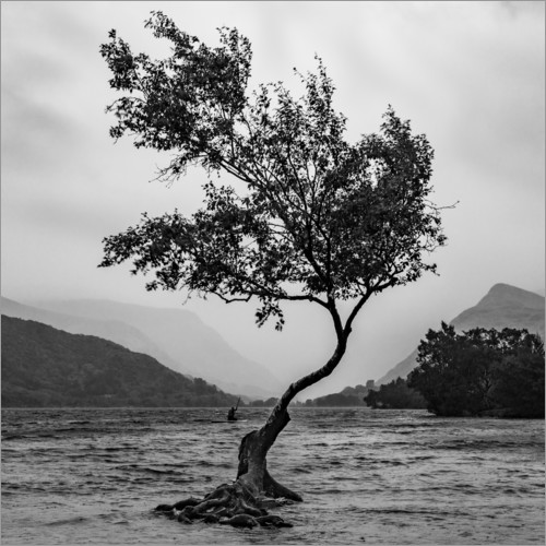 Plakat Lonely tree defies the weather