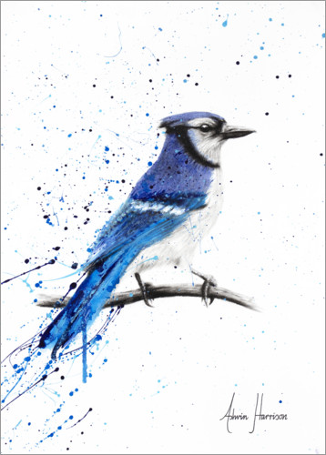 Plakat Blue Jay Bird