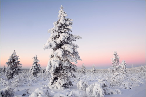 Plakat Winter landscape in Finland