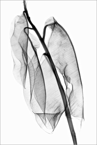 Plakat Plant leaves, X-ray