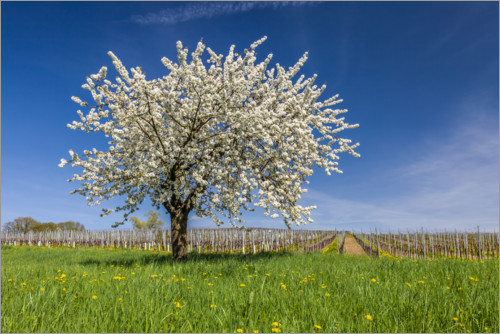 Plakat Spring dream - blooming cherry tree on flower meadow