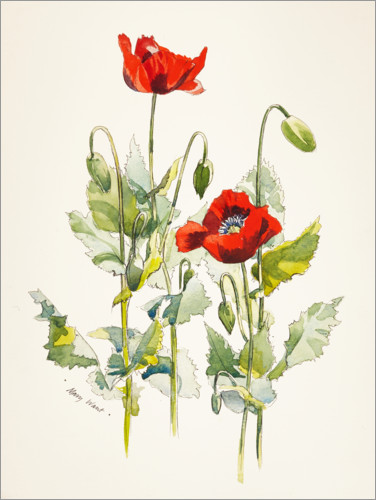 Plakat Poppies watercolor