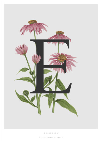 Plakat E is for Echinacea