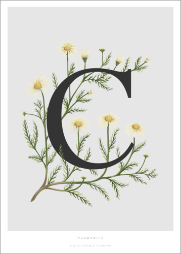 Plakat C is for Chamomile