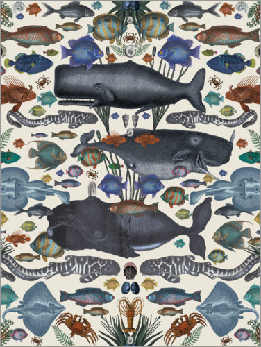 Plakat Whales and other marine animals