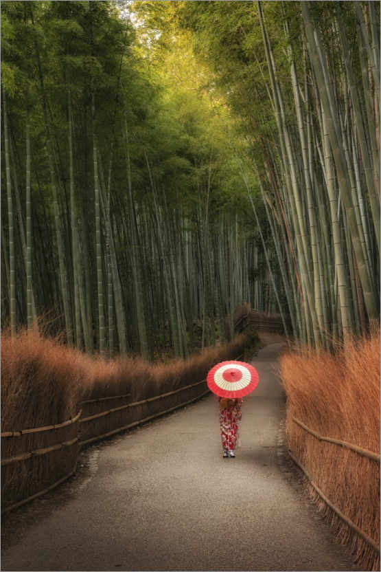 Plakat In the morning in the bamboo forest