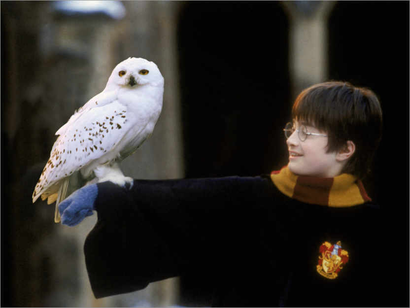 Plakat Harry Potter and the Sorcerer's Stone - Harry & Hedwig