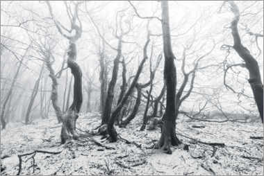 Obraz na płótnie  Mystical forest in the snow and fog - The Wandering Soul