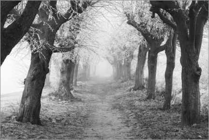 Gallery print  Linden avenue in the fog on a winter morning - The Wandering Soul