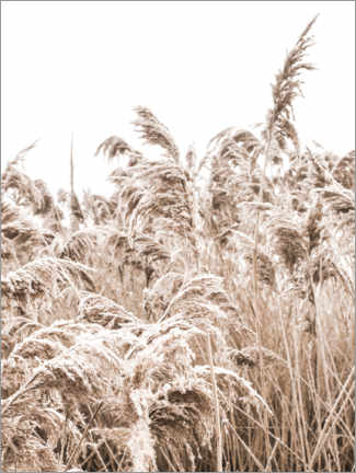 Gallery print  Golden grass III - Magda Izzard