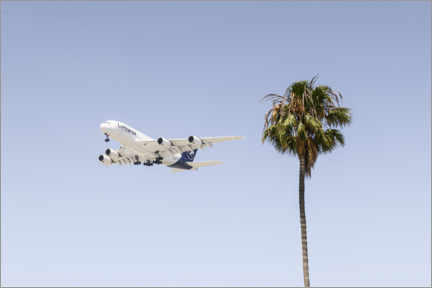 Obraz na PCV  Airbus A380 over palm trees - Ulrich Beinert