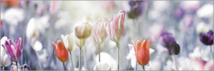 Plakat Tulips in pastel colors