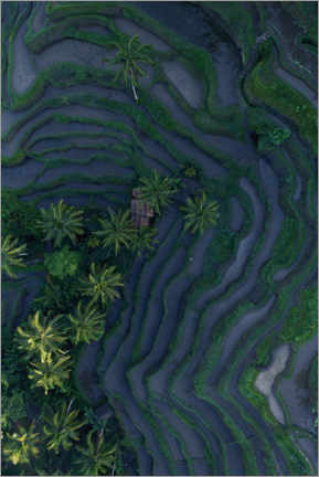Plakat  Tropical fields from above - Studio Nahili