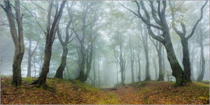 Plakat Mysterious forest in the fog