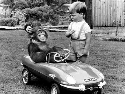 Plakat Monkey sits in a child's car