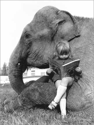 Obraz na płótnie  Girl sits on elephant and reads - John Drysdale