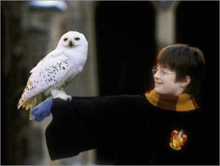 Obraz na szkle akrylowym  Harry Potter and the Sorcerer's Stone - Harry & Hedwig