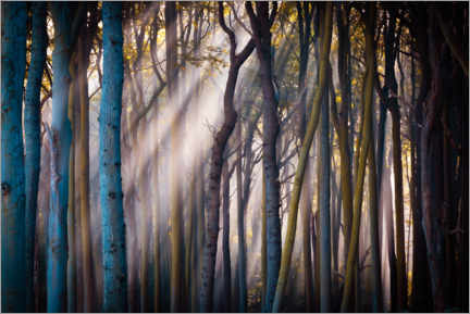 Plakat Forest in the morning