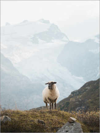 Plakat Sheep in the Swiss Alps