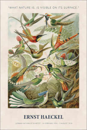 Obraz na PCV  Ernst Haeckel - What nature is - Museum Art Edition