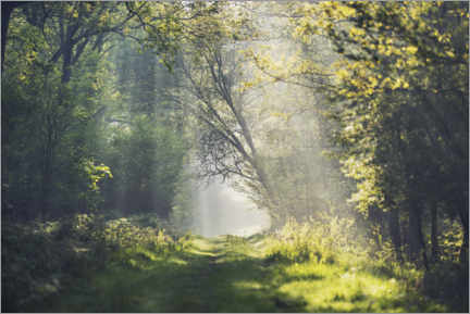 Naklejka na ścianę  Fantastic forest path in the morning light - The Wandering Soul