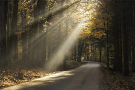 Plakat Rays of light in the autumn forest
