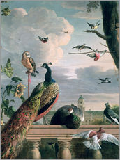 Gallery print  Palace of Amsterdam with exotic birds - Melchior de Hondecoeter
