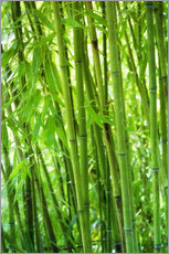 Gallery print  Bamboo forest - Thomas Herzog