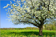 Gallery print  Blossoming trees in spring rural meadow - Peter Wey