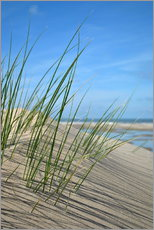 Gallery print  Dune grasses before playscape - Susanne Herppich