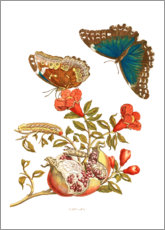 Plakat  Pomegranate and blue morpho - Maria Sibylla Merian