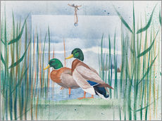 Naklejka na ścianę  Pair of wild ducks - Franz Heigl