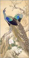 Gallery print  Two peacocks in spring - Imao Keinen