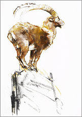 Gallery print  Ibex ready to jump - Mark Adlington
