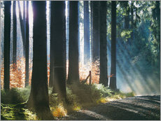 Gallery print  Morning Light in the Forrest - Martina Cross