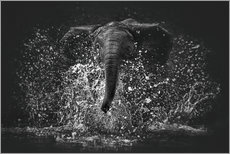 Gallery print  Elephant Power - Manuela Kulpa