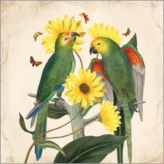 Gallery print  Oh my parrot II - Mandy Reinmuth