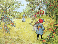 Gallery print  The Apple Harvest - Carl Larsson