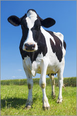 Gallery print  Cow - Black and White