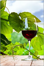 Gallery print  glass with red wine in vineyard