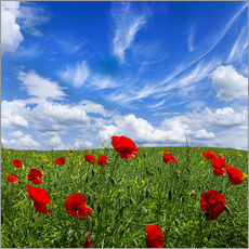 Gallery print  Red poppies on green field