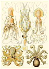 Naklejka na ścianę  Squid and octopi - Ernst Haeckel