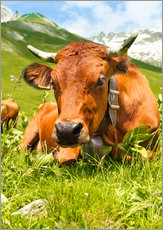 Gallery print  Cow with bell on Mountain Pasture