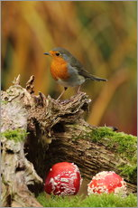 Gallery print  Robin in the fairy forest - Uwe Fuchs