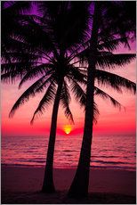 Gallery print  Palm trees and tropical sunset