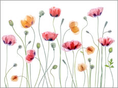 Naklejka na ścianę  Poppy party - Mandy Disher